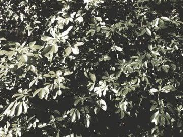 masyu013