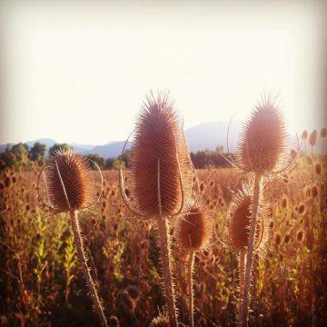 Tremper_Instagram_0006a