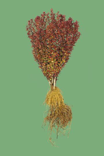 botanicals_02