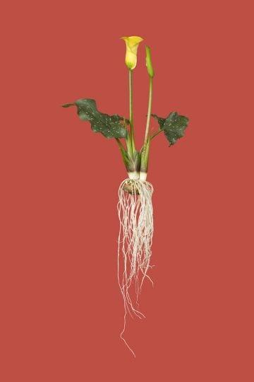 botanicals_04