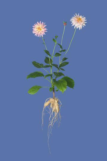 botanicals_06