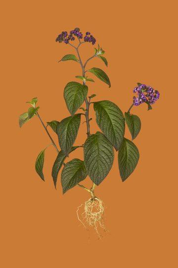 botanicals_08