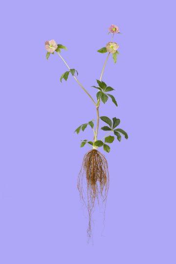 botanicals_09