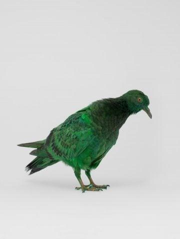 some_pigeons01
