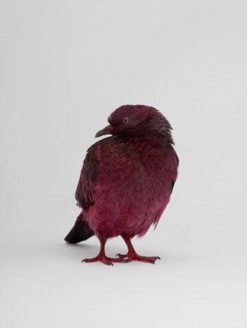 some_pigeons02