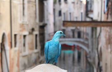 some_pigeons05a