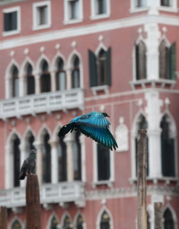 some_pigeons10