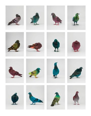 some_pigeons13