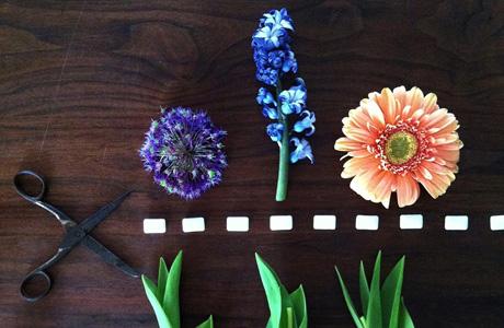 Insta Favs #35: Houtenboom
