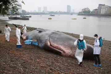 lo-whale01