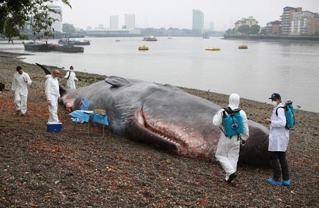 whale_pre