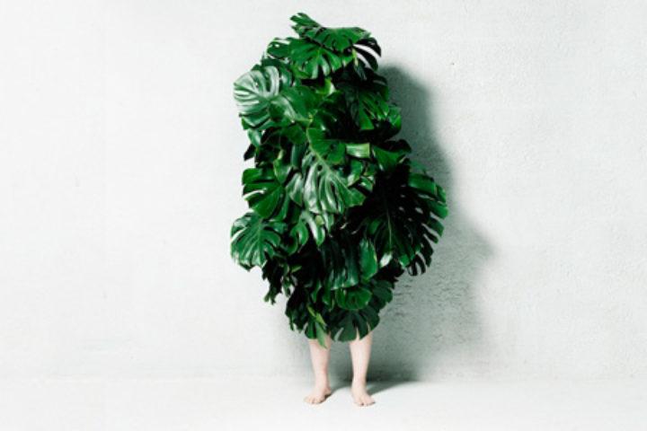 leafmanpre