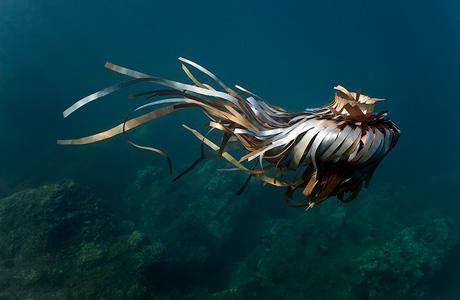 Unterwasser Skulpturen