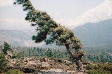 windy_trees_pre