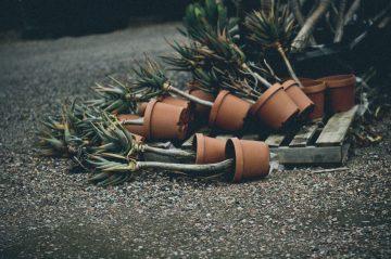 broken_botany06