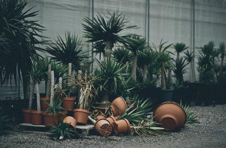 Broken Botany