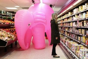 elephant_pre