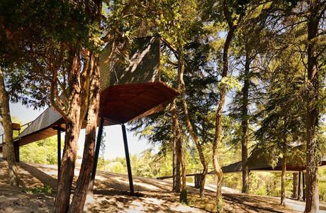 Tree Snake House