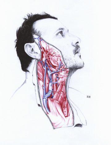 Anatomy_of_01