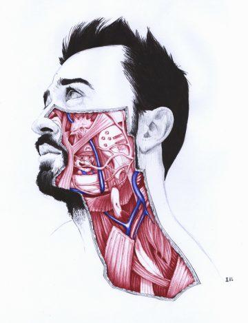 Anatomy_of_03