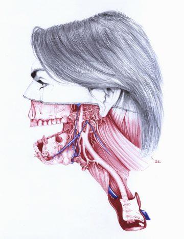 Anatomy_of_05