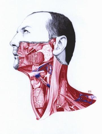 Anatomy_of_07