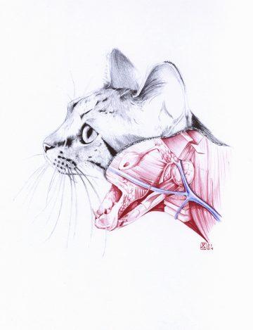 Anatomy_of_09