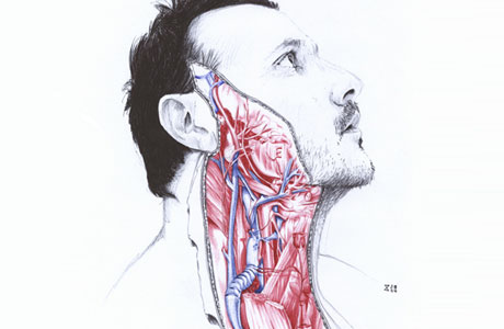Anatomical Illustrations by Salvatore Zanfrisco