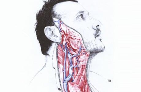 Anatomy_of_pre