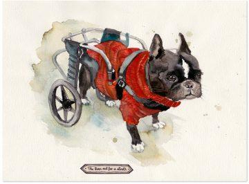 Hund-Rollstuhl-Monja-Gentschow