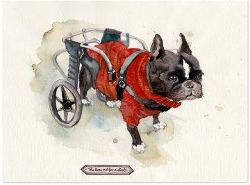 Hund-Rollstuhl-Monja-Gentschow_big