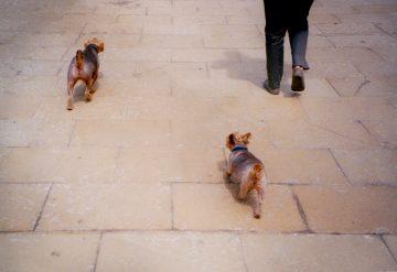 Hunde-Monja-Gentschow