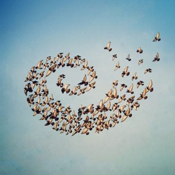 Shaun_Kardinal_Flying_Formation_01