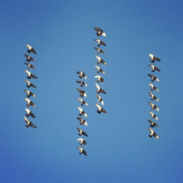 Shaun_Kardinal_Flying_Formation_06