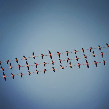 Shaun_Kardinal_Flying_Formation_07
