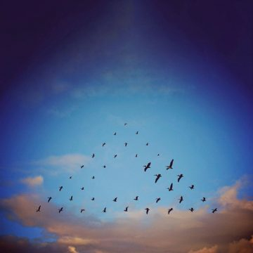 Shaun_Kardinal_Flying_Formation_08