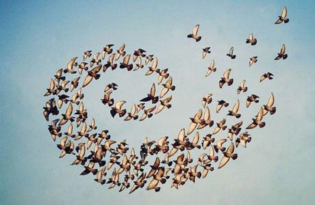 Flying Formation by Shaun Kardinal