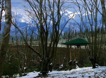 Tree_Tent_02