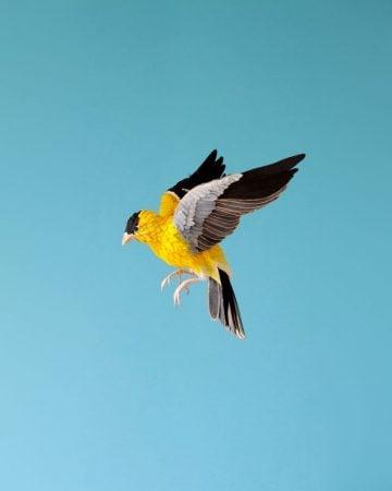 DIANA_BELTRAN_HERRERA_Paper_Birds_Art_01a