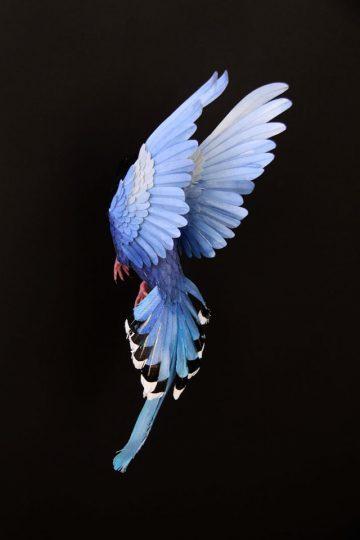 DIANA_BELTRAN_HERRERA_Paper_Birds_Art_02