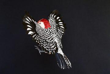 DIANA_BELTRAN_HERRERA_Paper_Birds_Art_08