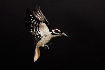 DIANA_BELTRAN_HERRERA_Paper_Birds_Art_09