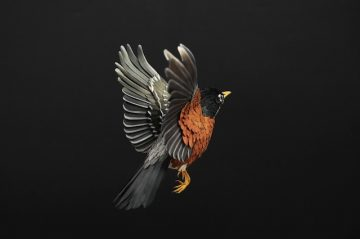 DIANA_BELTRAN_HERRERA_Paper_Birds_Art_11