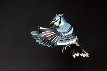 DIANA_BELTRAN_HERRERA_Paper_Birds_Art_12