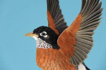 DIANA_BELTRAN_HERRERA_Paper_Birds_Art_13