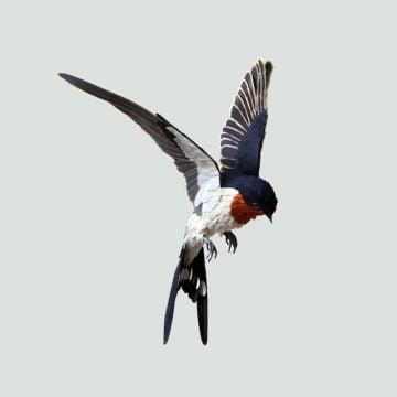 DIANA_BELTRAN_HERRERA_Paper_Birds_Art_14