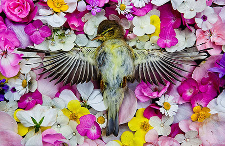 Natura Morta by Maria Ionova-Gribina