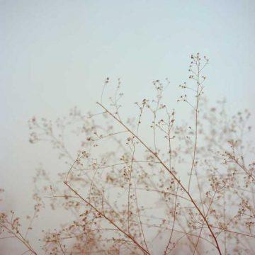 Du-Yang_Photography_11
