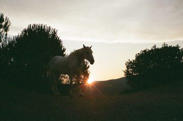 Clemens_Fantur_Photography_08