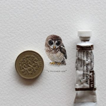lorraine_Loots_Postcards_For_Ants_02